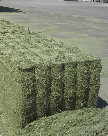 Balas de Alfalfa Deshidratada